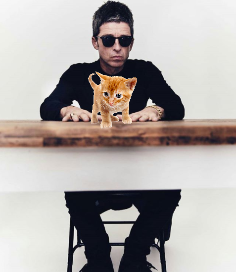 noel gallagher gatto